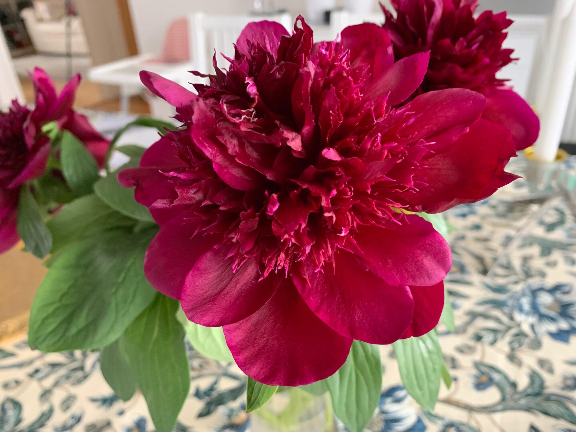Blommor och frösådd
